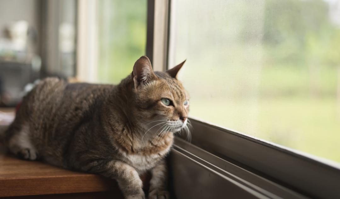 moskitiera na okno dla kota