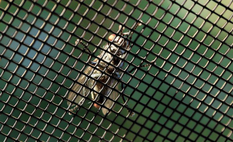 Rozmiar moskitery plisowanej